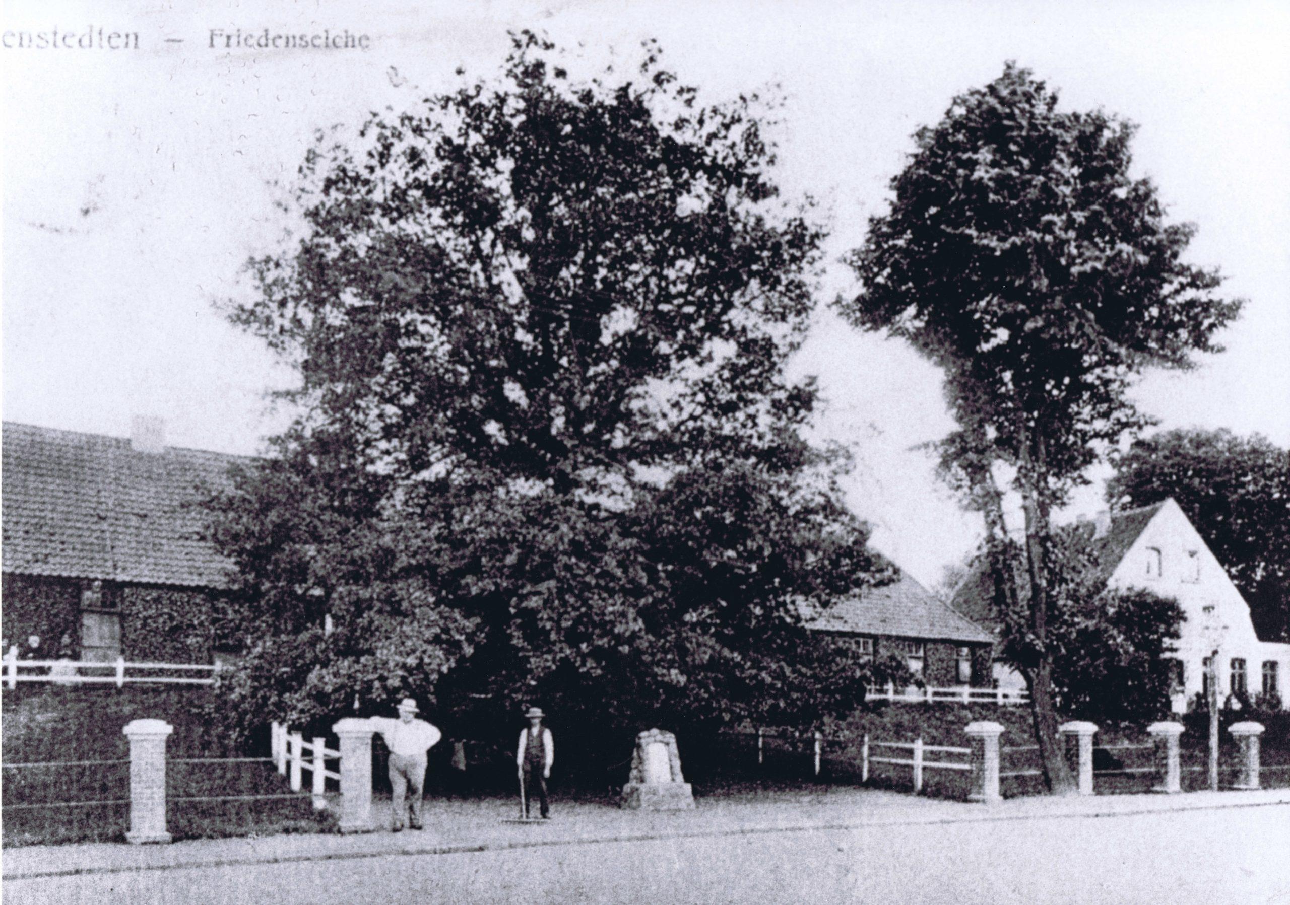 """""""Friedenseiche mit Präbendenhaus im Hintergrund (Hauptstraße 27)"""""""